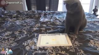 Кот играет в игру на планшете