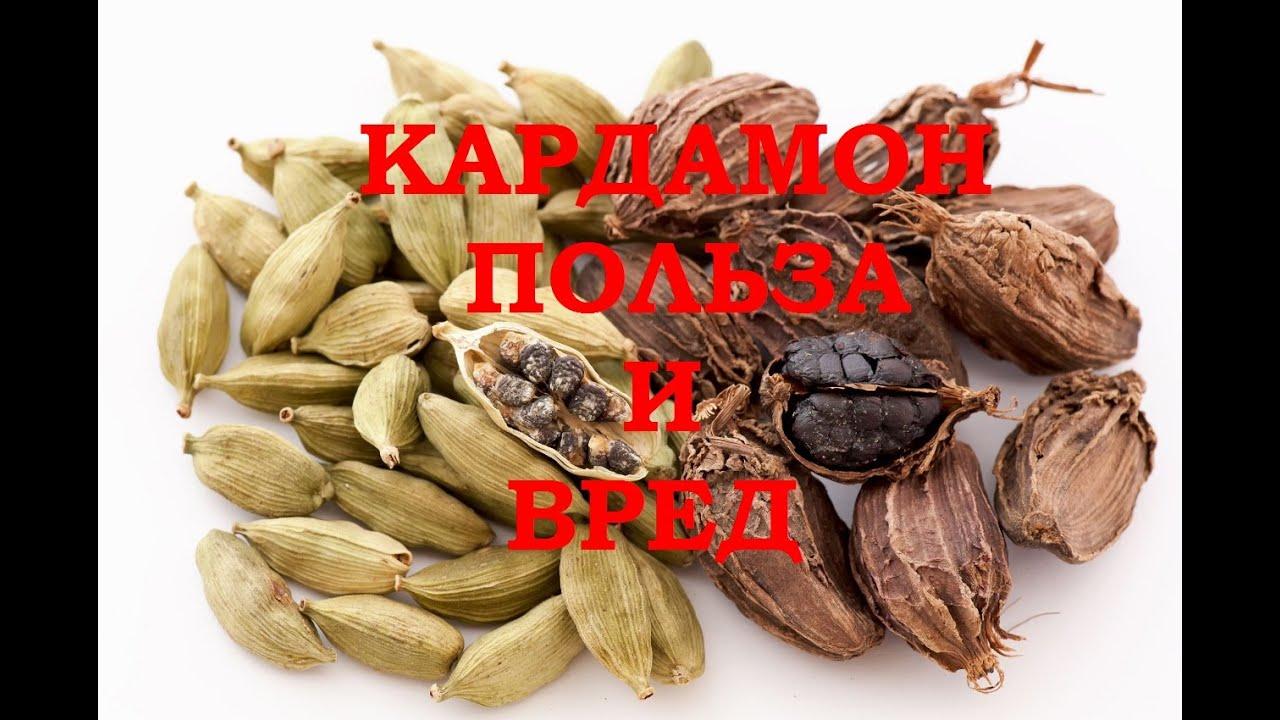 кардамон полезные свойства