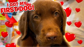 I Adopted A Puppy Today.. My First Dog Ever!! *Chocolate Lab*