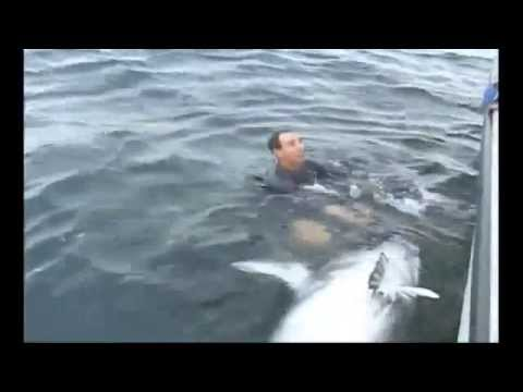 Giant Bluefin Tuna - 900+ lbs - Prince Edward Island (PEI), Canada