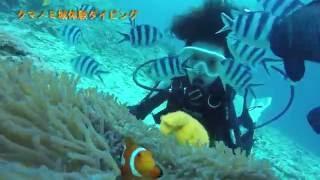 サンゴの楽園+クマノミ&熱帯魚シュノーケルor体験ダイビングツアー】 h...