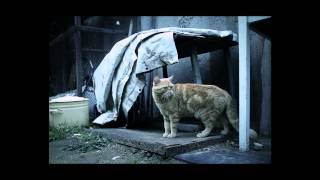 Кошки видят мир.mp4