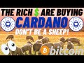 CARDANO ADA FLOOD GATES ARE ABOUT TO OPEN! INSTITUTIONS BUYING ADA! CRYPTO MARKET SET TO RECOVER
