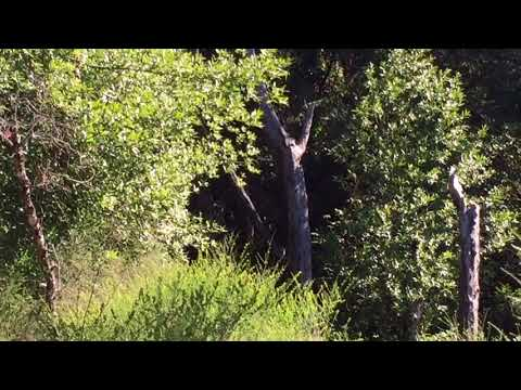 High definition Bigfoot Billy hike
