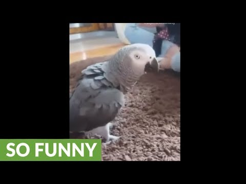 Parrot sees owner jumping, flawlessly imitates her