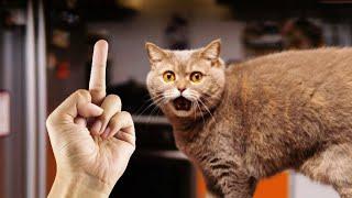 ПРИКОЛЫ С ЖИВОТНЫМИ ДО СЛЕЗ Смешные КОТЫ 2021 Приколы с КОТАМИ Funny ANIMALS video 52