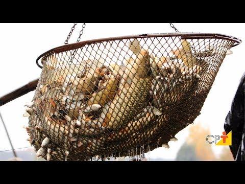 Clique e veja o vídeo Curso Criação de Peixes - Como Implantar uma Piscicultura - Despesca