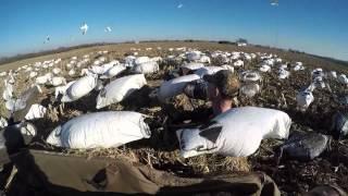 Snow Goose Hunt 1 2015