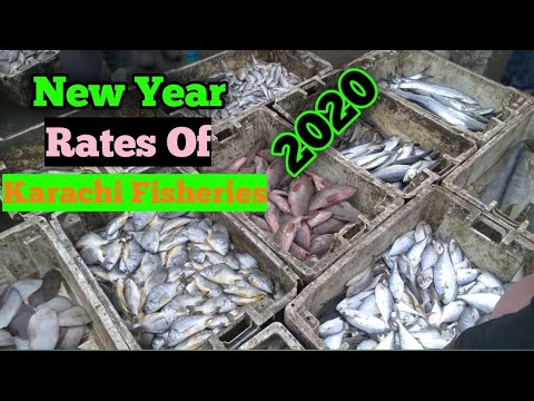 Latest Rates Of Fish,Prawn, Crab,Lobster Karachi Fishery Market On 1st Jan 2020