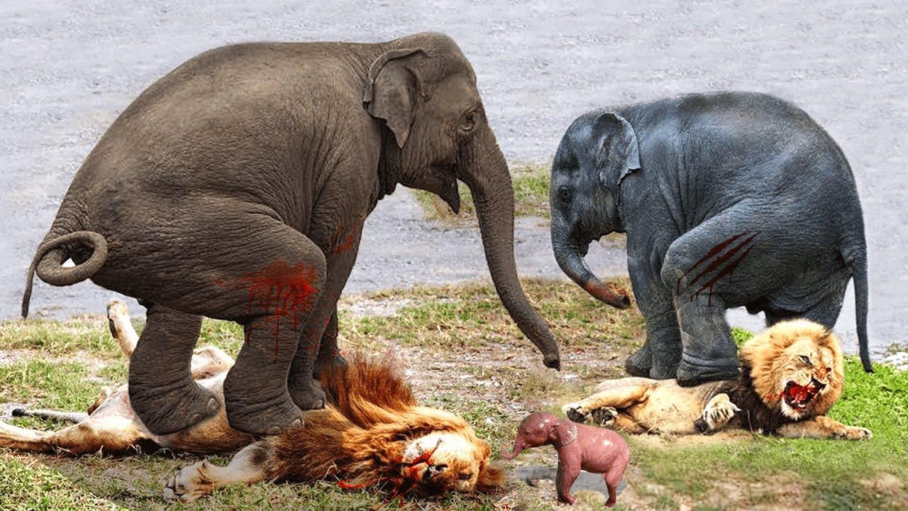 ভয়ংকর সিংহ হাতির কাছে হেরে গেল || এরা একবার রেগে গেলে কাউকে ছাড়ে না World's Most Aggressive Animals