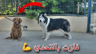 اقوى تحدي بين جاك والكلبه الجديده !! هزيمه جاك 😱