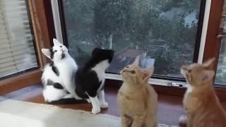 Бесплатно отдам котят!