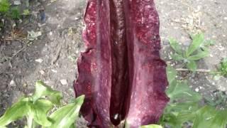 gardening flower #11