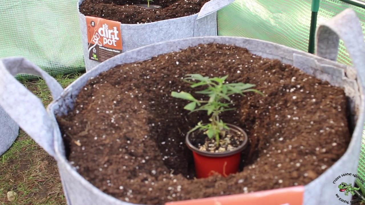 Transplanting my Sour Diesel & OG Sour Dream Clones into Dirt Pots