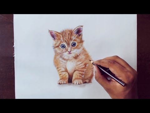drawing-animals-1---drawing-a-kitty---prismacolor-pencils