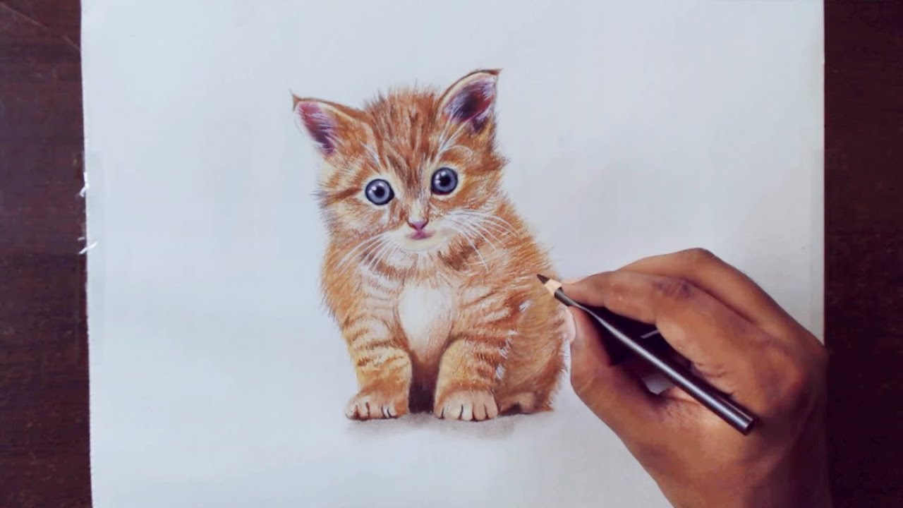 How to draw animals in pencil