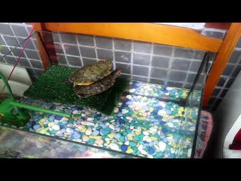 Как отдыхают наши черепахи (Черебургеры)