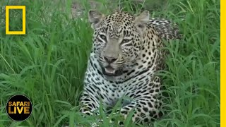 Safari Live - Day 292 | National Geographic