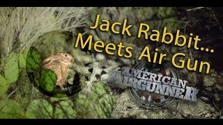 Hunting Big Jack Rabbits with an Air Rifle
