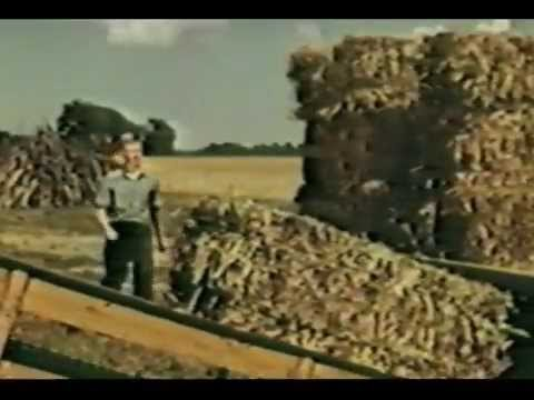 American Farmer Movie - 1953, Blazey Family | Ford Motor Company