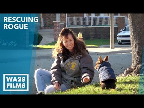 Dog Attends Church You Won't Believe How Detroit Pit Crew Gets Him Back Home: Ep #17 Rescuing Rogue