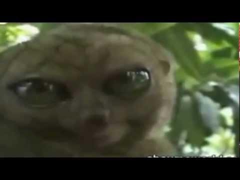 Meilleures vid os dr les d 39 animaux 2011 youtube - Videos droles d animaux ...