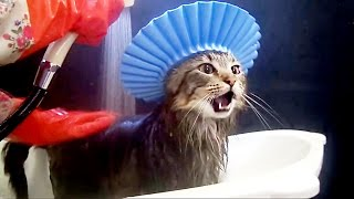 Cats in the bath  funny compilaition