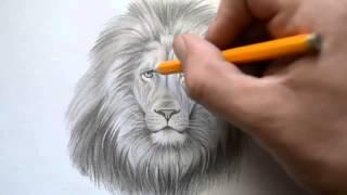 Как нарисовать голову льва(КАК НАРИСОВАТЬ ГОЛОВУ ЛЬВА., 2014-02-15T07:22:40.000Z)