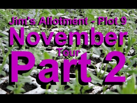 Jim's Allotment - Plot 9 - November Tour Part 2 - Sweet Potato, Coffee & Worms