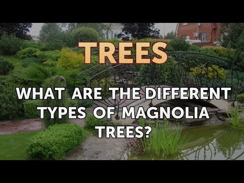What Are The Different Types Of Magnolia Trees
