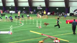 Bowie Agility - Novice Std May 28, 2011