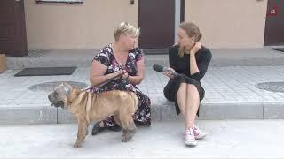 У пункті перетримки тварин рятують шарпея Мальту. Колишні господарі хотіли її усипити