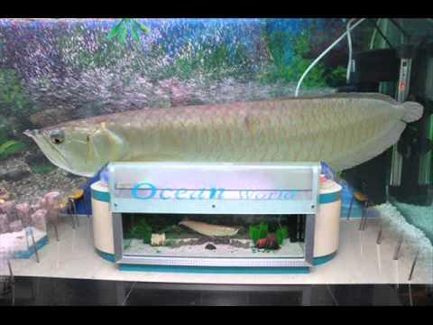 The Best Aquarium Shop In India Ocean World Youtube