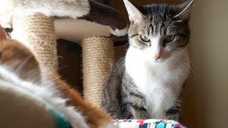 ベッドで寝たかった猫(おはぎ)です。 【blog http://ameblo.jp/nesuko...