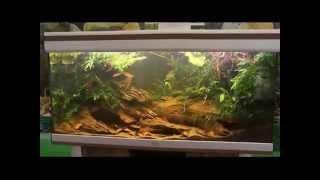 JBL Конкурс дизайна биотопных аквариумов 2014. Финал