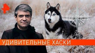Удивительные хаски. НИИ РЕН ТВ (26.09.2019).