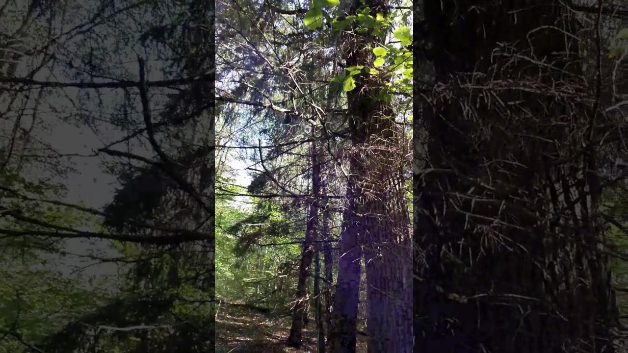 Словил в лесу видео фото 746-173