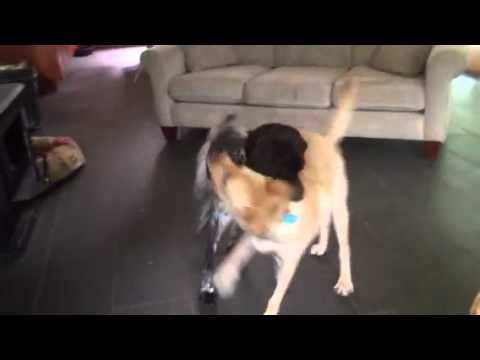 Moose & Jack playing
