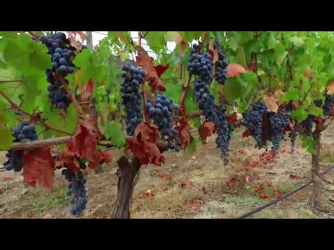WINES OF CHILE - Gourmet & Wine Travel in Chile | SMS Frankfurt Group Travel Special Interest Tours
