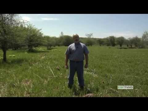 Wetland Delineation - Site Sampling