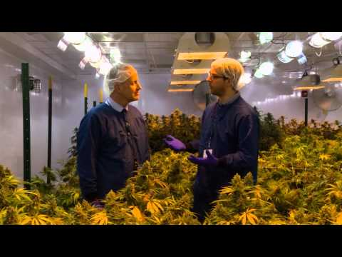 CTPharma - Medical Marijuana in Connecticut