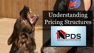 How Are Elite Executive Level Family Personal Protection Dogs Priced?