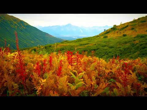Peaceful Nature Sounds Wind & Birds | Use To Sleep, Study, Relax, Meditate, Focus | White Noise