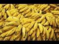 The Therapeutic Qualities of Bananas Based on Ayurvedic Principles.