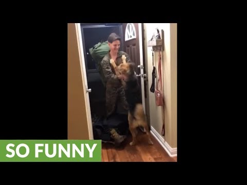 Ecstatic dog welcomes home owner returning from deployment