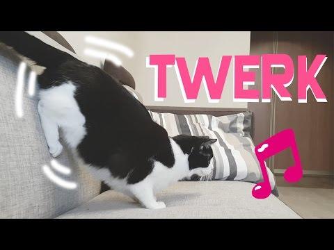 CAT IS DANCING TWERK !