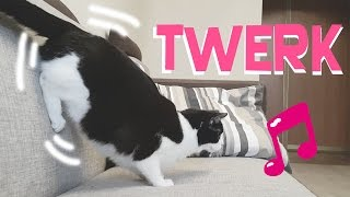 CAT IS DANCING TWERK !