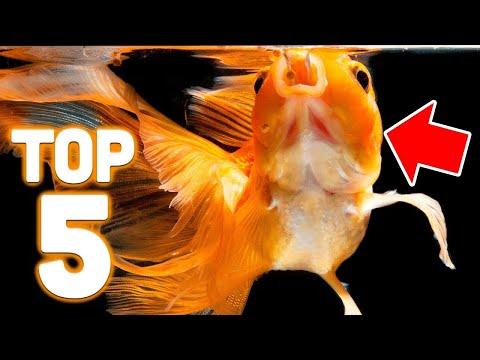 Top 5 Goldfish Foods