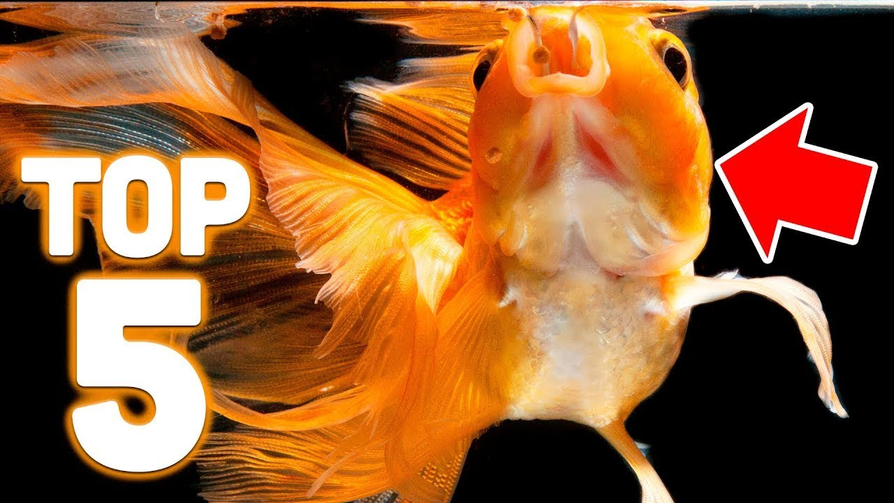 What Do Goldfish Eat? | LoveToKnow