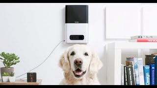 7 COOL GADGETS FOR YOUR PET 2019